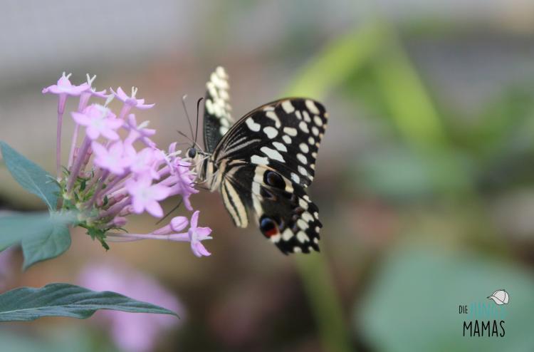 schmetterling an Blume
